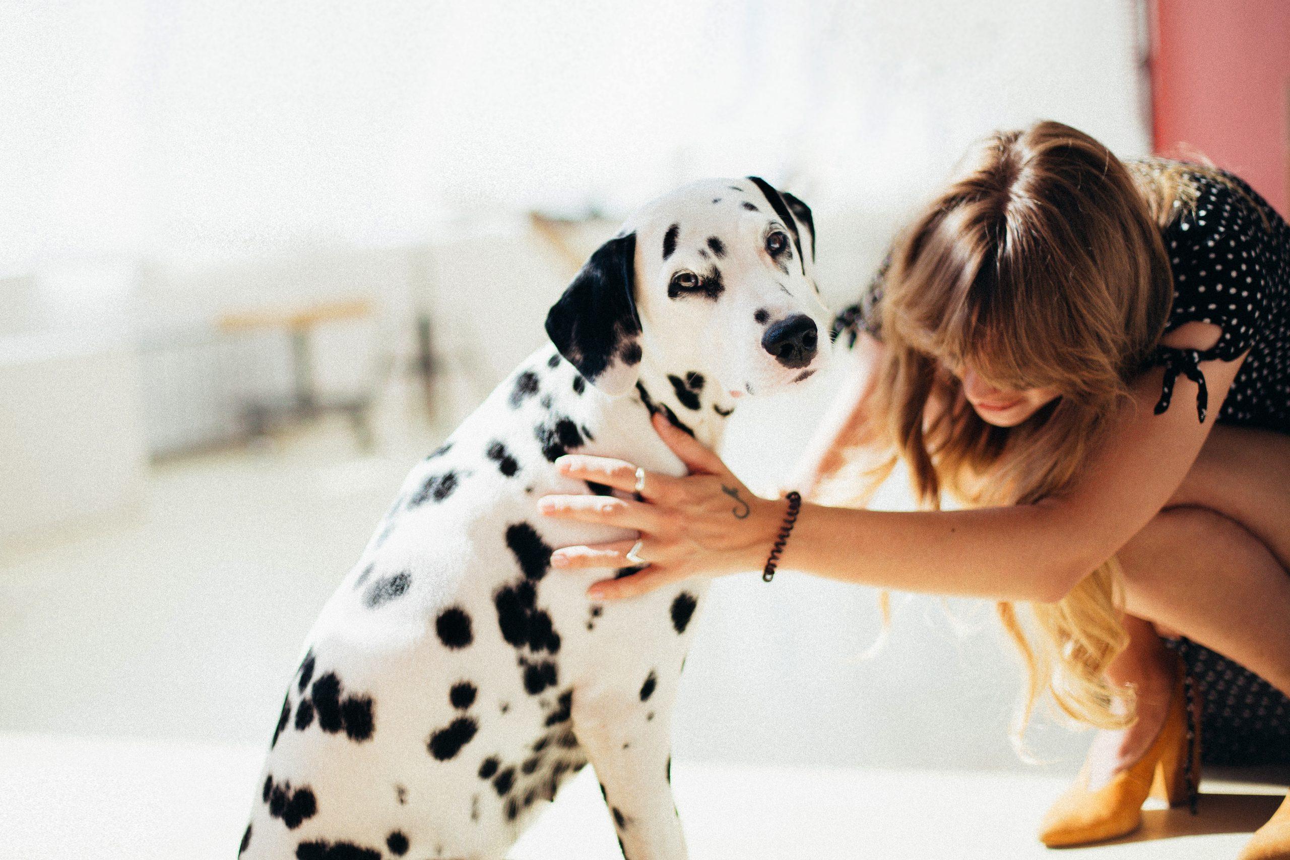 house'dog-psiakowidzenie (1)